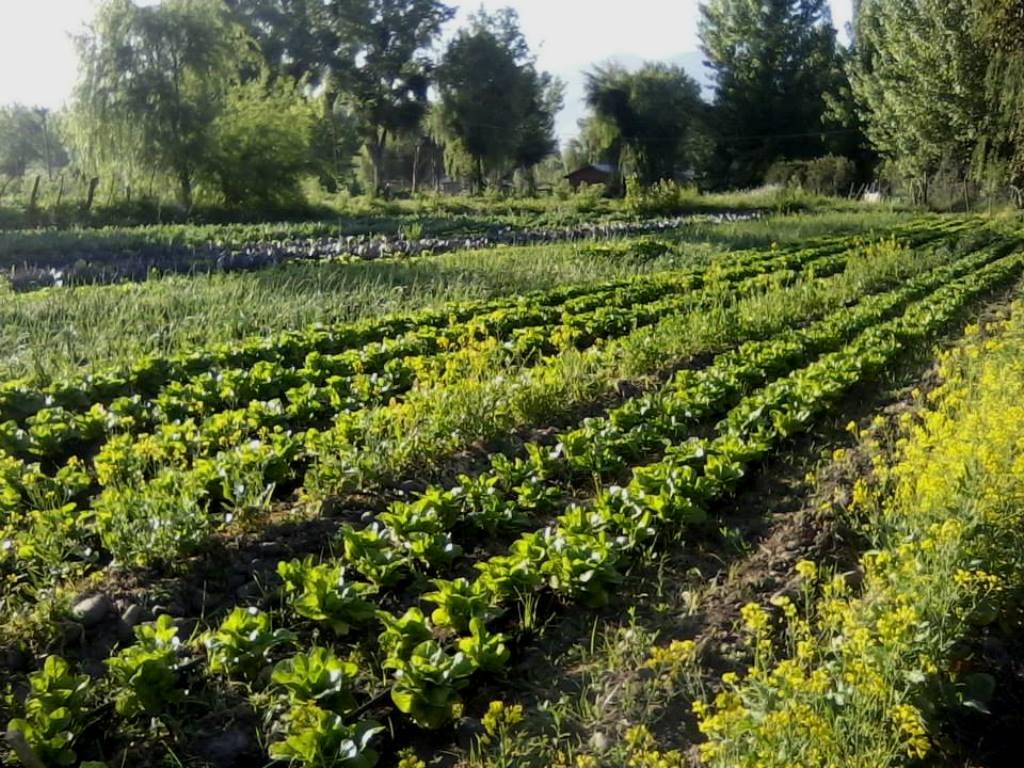 Agricultura sustentable – COPROFAM