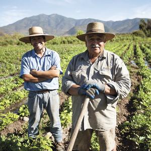 Programa de Desarrollo Social Agropecuario: el sueño y ascenso productivo de Renato
