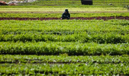 Se capacitará a más de 500 agricultores de la región de Los Lagos