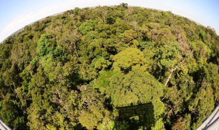 5 de septiembre – Día de la Amazonia