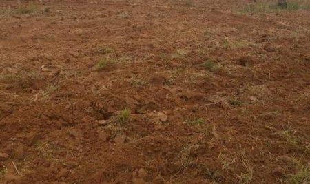 Falta de lluvia retrasa siembra de los principales rubros de la AFC